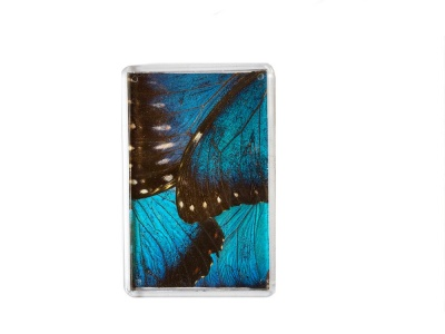 BLUE MORPHO FRIDGE MAGNET